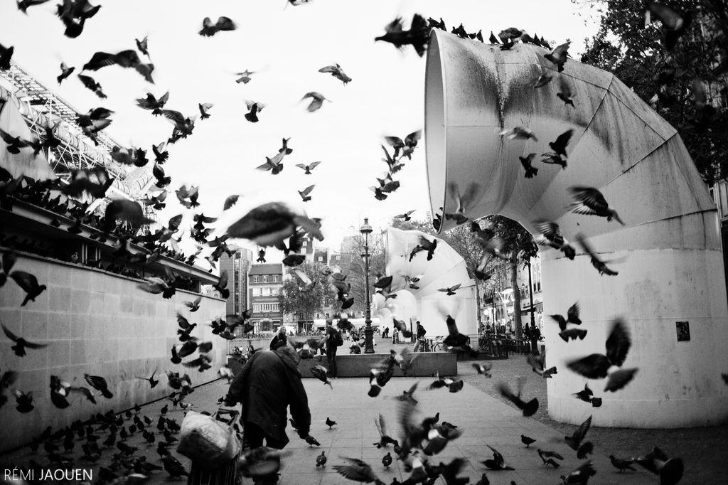Photographe Paris - Serie People of Paris - Beaubourg - Giuseppe et ses pigeons