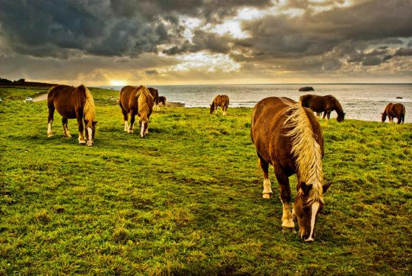 Les chevaux de Brest